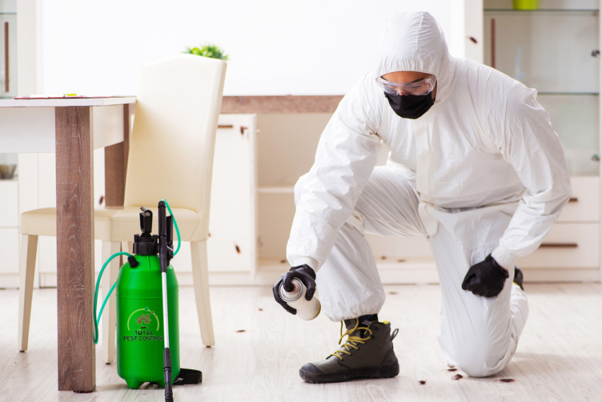 How to Control Ant Infestation in Your Commercial Kitchen?