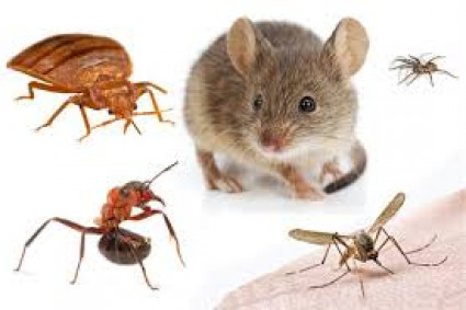 Use Pest Control Service to Keep Your Home Safe
