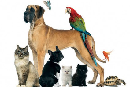 The Role of Animal Medical Centres in Society   Cohuna Vets